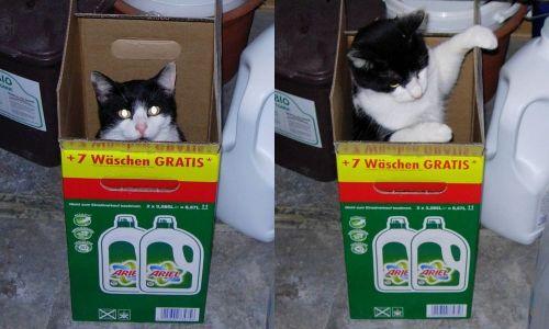 KatzenwäscheII